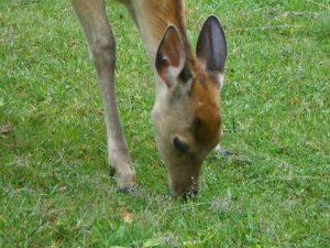 奈良で会った鹿さん